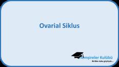 Ovarial Siklus
